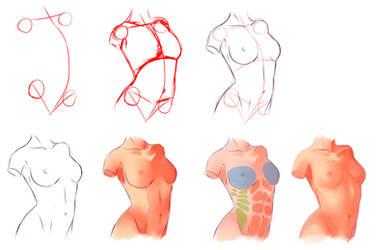Female Anatomy by ryky