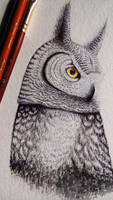 Owl by Nastya-An