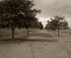 Trees and Cement by jfDoyon