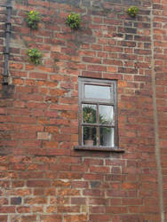 Window by realler
