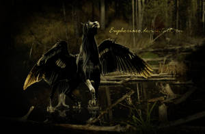 BUCEPHALUS by LacedwithEuphoria
