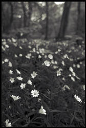 the wildflowers by keshuval