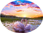 Swan Lake by WhimsicalBlue