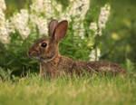 The Hare by AlinaKurbiel