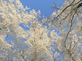Stock, Treetops frosty gathering 1.x179 JPG (428) by FractalCaleidoscope
