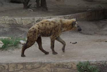 Hyena1 by stock-by-kelesaii