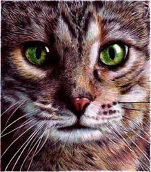 Cat Eyes - Bic Ballpoint Pen by VianaArts