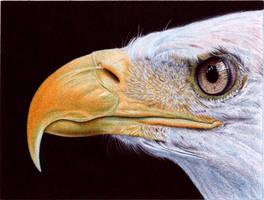 Bald Eagle - Ballpoint Pen by VianaArts