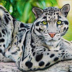 Clouded Leopard - Ballpoint Pen by VianaArts