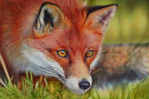 Red Fox - Ballpoint Pen by VianaArts