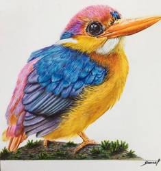 Dwarf Kingfisher - A ballpoint pen study by VianaArts