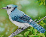 Blue Jay - Ballpoint Pen by VianaArts