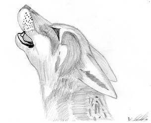 Wolf by fr3dan