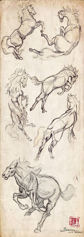 Animal Studies . Horses by Sorren-Chan