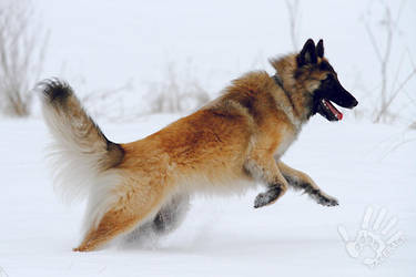 Running in the snow by Chila-Sahara