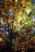Autumn by szy1985