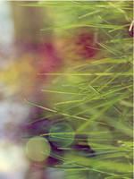 Vintage grass by ChrisPhotographer