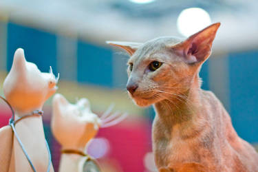 Cats IIIII by otum