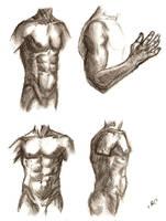 male torso - study by zimtxstern