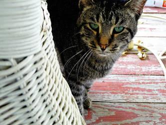 Cat Friend by JordanCartwright1234