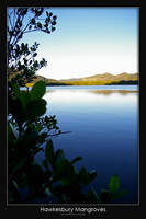 Hawkesbury Mangroves by AB-Photography