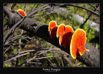 Funky Fungus by AB-Photography