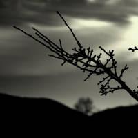 .:distant:. by neslihans