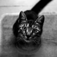 .:love me- feed me:. by neslihans