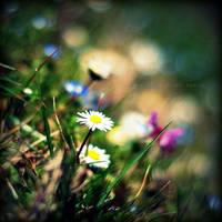 .:Daisy's Daisies III:. by neslihans