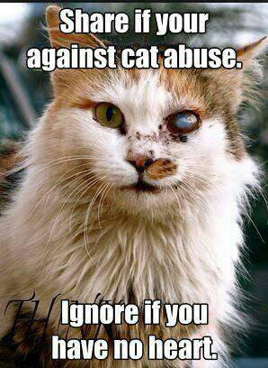Anti Cat Abuse by Cat-Lover-6