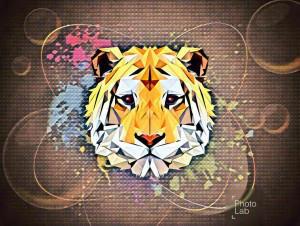Cat-Lover-6's Profile Picture
