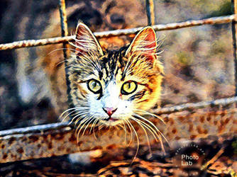 Cat by Cat-Lover-6