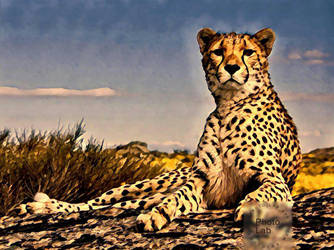 Cheetah by Cat-Lover-6