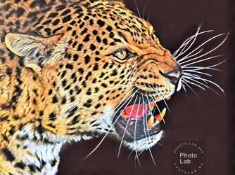Leopard by Cat-Lover-6