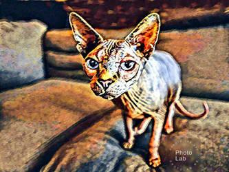 Sphynx Cat by Cat-Lover-6