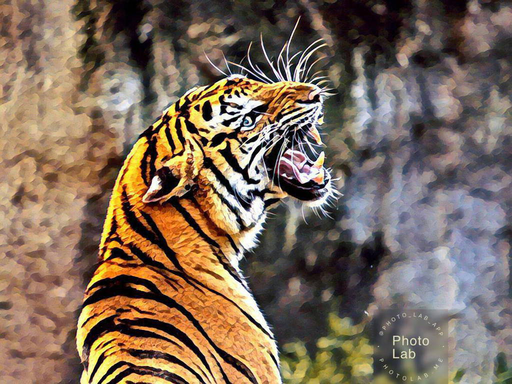 Tiger by Cat-Lover-6