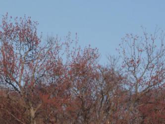 Sky and Tree by RainbowCyle