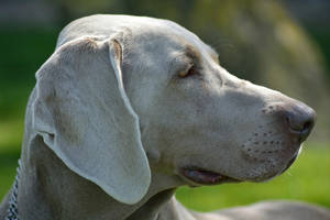 Profile of Rocko by Tivil