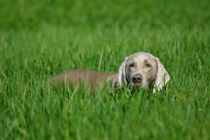 Rocko in the field by Tivil
