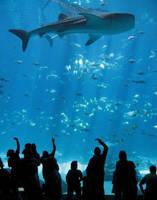 Whale Shark Viewing by jennalynnrichards