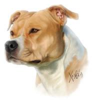 American Staffordshire Terrier by RedEyedDemon