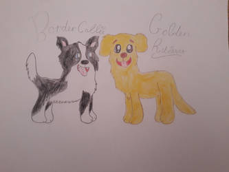 Border Collie and Golden Retriever  by RainbowHeartPony