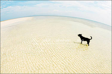 Dog Against the World by technodium