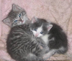 Kittens by Indigo-von-Hass