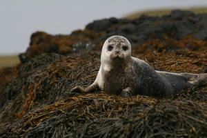 Seal by filth666
