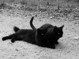 Black Cats by HollyMarieMa
