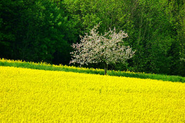 yellow paradise 1 by Dieffi