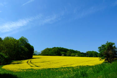 yellow paradise 6 by Dieffi
