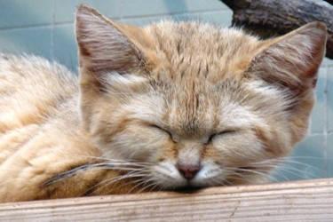 sleep deep by Dieffi