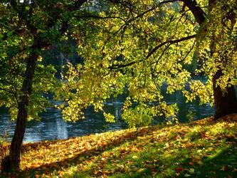 golden light of October 2 by Dieffi